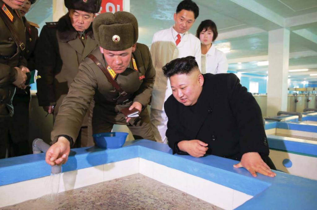Ким Чен Ын посетил Самчхонскую сомоводческую ферму